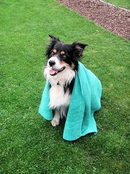 Aqua Green Dog Towel - Crosby