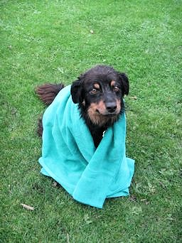 Aqua Green Dog Towel - Rex